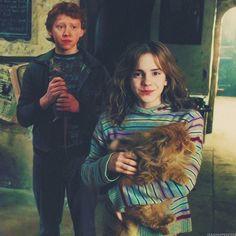 Hermione, Ron, and Crookshanks