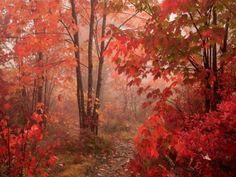 Beautiful Autumn Red ~ PC Walpaper