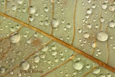Macro Photography: How to Photographing Patterns in Nature  #leaf with raindrops