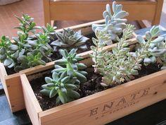 Blog_Reparalia_reciclaje_cajas_vino_madera__maceteros_plantas.jpg (640×480)