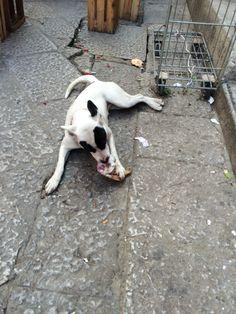 Palermo, mercato del capo, un cane si spolpa il suo osso