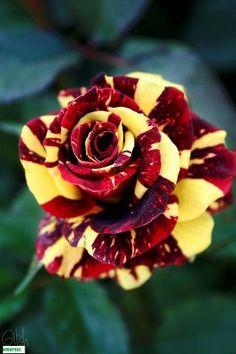 3.blogspot.com/ http://garden-care-hoeing-and-weeding-2015.blogspot.com/ # Roses
