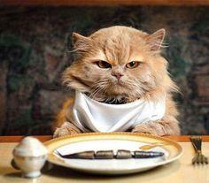 How much should I feed my cat?  Cuánto debe comer mi gato?