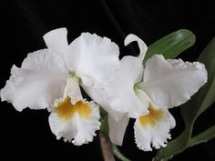 Cattleya Flower For More Visit… www.flowerhomes.blogspot.com www.facebook.com/flowerofworld
