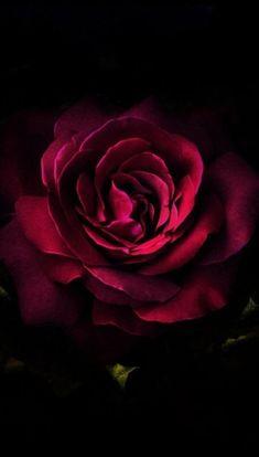 62 Ideas For Flowers Wallpaper Iphone Dark Flower Iphone Wallpaper, Android Phone Wallpaper, Wallpapers Android, Red Wallpaper, Nature Wallpaper, Wallpaper Backgrounds, Wallpaper Ideas, Beautiful Red Roses, Red Flowers