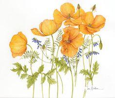 Marcia Batoni - Artes Visuais: *Jan Harbon