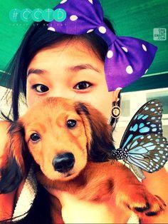 www.lesbananas.us Baby Adam-long hair mini #doxie #dachshund #puppy