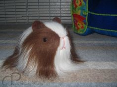 Little Guinea Pig Plushie - Brown & White Sheltie