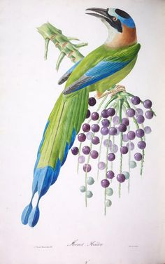 Biodiversity Heritage Library: Brilliant and Remarkable Birds of Brazil