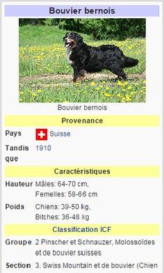 I LOVE Rottweiler Chien Chaussettes rottweiler chiens propriétaires chaussettes fantaisie Cadeau