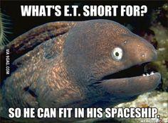 Bad Joke Eel strikes again.