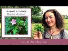 Kakost smrdutý (Geranium robertianum) - YouTube Geraniums, Den, Youtube, Youtubers, Youtube Movies
