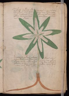 Cipher Manuscript 7r