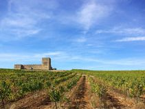 Vote for the as Readers' Choice for Best Wine Region to visit Photo: Alentejo, Portugal Visit Portugal, Travel Planner, Travel Guides, Vineyard, Tourism, To Go, Country Roads, Nice News, Wine