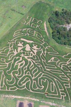 Labyrinth Maze:  Corn #maze.