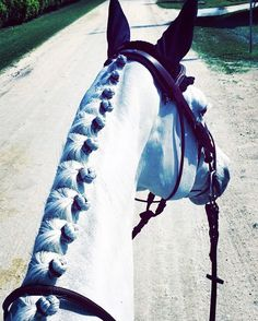 From Jumper Nation: Battle of the Braids! | HORSE NATION
