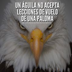 Image may contain: bird and text Smile Word, Quotes En Espanol, Millionaire Quotes, Postive Quotes, Spanish Quotes, Life Motivation, Swagg, Great Quotes, Bald Eagle