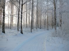 White winter of Finland.