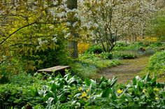 The Beth Chatto Gardens - Woodland Garden