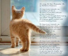 My beautiful fur-babies ~ Pet Loss Quotes, Cat Quotes, Animal Quotes, Animal Poems, Pet Poems, Crazy Cat Lady, Crazy Cats, Westies, I Love Cats