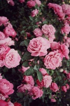 Wallpaper Iphone Vintage Flowers Photography Pink Roses 18 Ideas For 2019