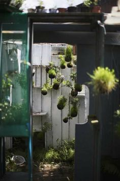 Suspended String Gardens (To show to Coco) This link has multiple pictures of plants hanging from string as art installations.  Sculptural but impractical - too much watering!