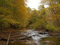 Pymatuning State Park, Pennsylvania.