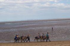 Donkey`s on Cleethorpes beach 2013