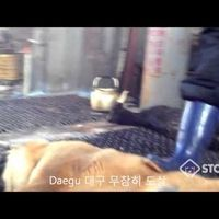 South Korea: Pass the amendment to Animal Protection Act. Protect animals from cruelty and improve the welfare of Korean animals!