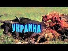 Украина. Схватка бешеных гиен над окровавленным телом страны!
