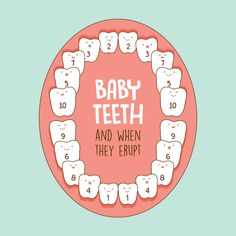 DID YOU KNOW that baby teeth erupt in a particular order? We've numbered each tooth based on the order it emerges in this diagram!