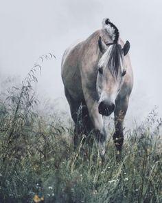"""638 gilla-markeringar, 27 kommentarer - Lina Kayser (@linakayser) på Instagram: """"Norwegian fjord horse saying hi"""""""
