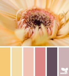 petalled hues color palette from Design Seeds Colour Pallette, Color Palate, Colour Schemes, Color Patterns, Color Combinations, Design Seeds, World Of Color, Color Stories, Color Swatches