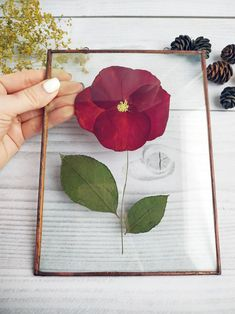 Wildflowers Pressed flower frame original herbarium frame botanical print decor for room Red rose petals Pressed flower frame original herbarium frame Red Rose Petals, Flower Petals, Red Roses, Pressed Roses, Pressed Flower Art, Art Floral, Framed Botanical Prints, Botanical Decor, Botanical Gardens