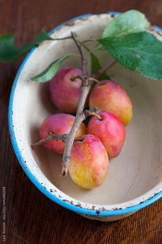 Lee Avison - harvested fresh plums in a vintage enameled dish