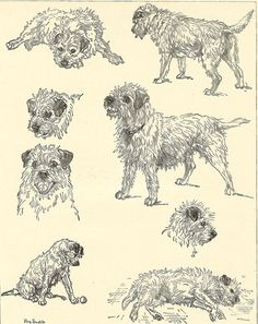 Vintage 1935 Black And White Dog Print Border Terrier Character By Vere Temple…