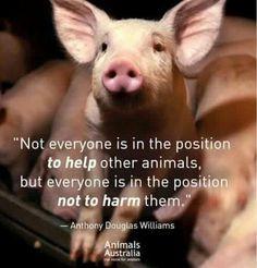 Animals Matter! Liberation