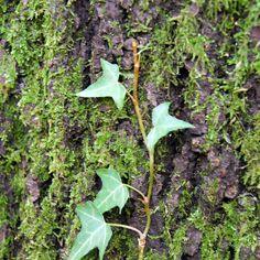 L'heura encara vol pujar Fruit, Plants, Photos, Flora, Plant