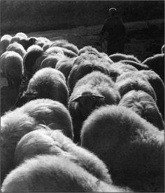 Ο Δημήτρης Χαρισιάδης γόνος αστικής οικογένειας καπνεμπόρων, γεννήθηκε στην Καβάλα το 1911. Σπούδασε Χημεία στη Λωζάνη, το ενδιαφέρον του ό... Greek Town, Greece, Photography, Greece Country, Photograph, Fotografie, Photoshoot, Fotografia