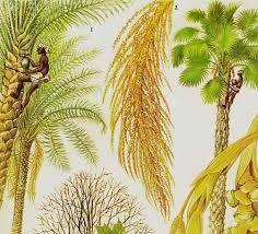 Image result for painted vintage  palm leaf
