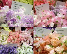 Japanese Bloom Fair NYC 2012