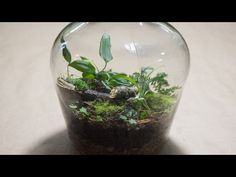 Making a Bottle Terrarium + Closed Terrarium Basics - YouTube