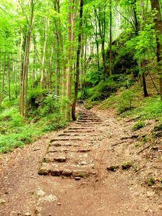 Jura Krakowsko-Częstochowska zdjęcia,  szlak w Ojcowskim Parku Narodowym