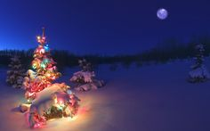 Christmas Tree with Lights in the Snow