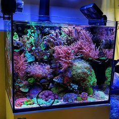 There is something about cube tanks that are full to the brim they're beautiful from all angles. Aquarium Design, Reef Aquarium, Saltwater Aquarium, Happy 4 Of July, 4th Of July, Reef Aquascaping, Nano Reef Tank, Nano Cube, Coral Tank