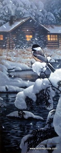 In Jerry Gadamus's print Cabin Creek Chickadee, a cute little bird sits on a snow-covered pine tree, quite a contrast to the warmth of the cozy log cabin. Fotografia Macro, Winter Magic, Winter Snow, Winter Scenery, All Nature, Snow Scenes, Winter Beauty, Christmas Scenes, Wildlife Art