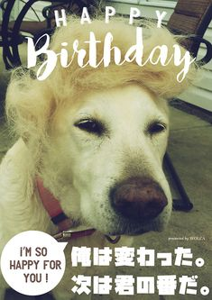 可愛い動物のおもしろ画像でお誕生日をお祝いしよう! Happy Birthday Animals, Animal Birthday, Birthday Photos, Birthday Presents, Funny Cards, My Friend, Funny Animals, Entertaining, Quotes