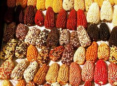 Peruvian Corn..uhmm diversity