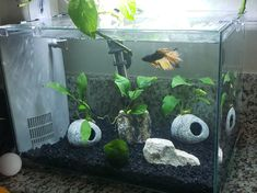Betta tank set up with rocks and live plants. Aquarium Garden, Aquarium Set, Betta Aquarium, Aquarium Design, Planted Aquarium, Planted Betta Tank, Betta Fish Tank, Small Fish Tanks, Cool Fish Tanks
