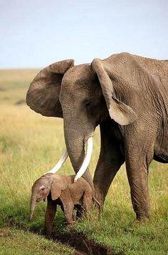 Elefante 02
